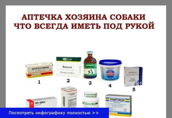 Лекарства собака
