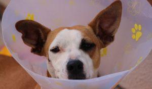 чистка параанальных желез у собак видео