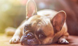 Помощь домашнему животному