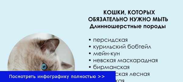 Мытье кошки как