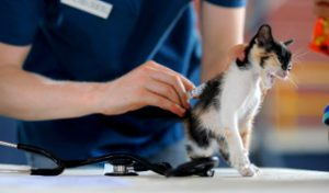 Анальные железы кошки