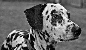 Забота о собаке