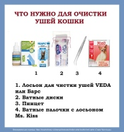 CHto-nuzhno-dlya-ochistki-ushej-koshki-1.jpg