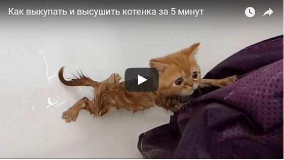 Когда можно мыть кота после кастрации?