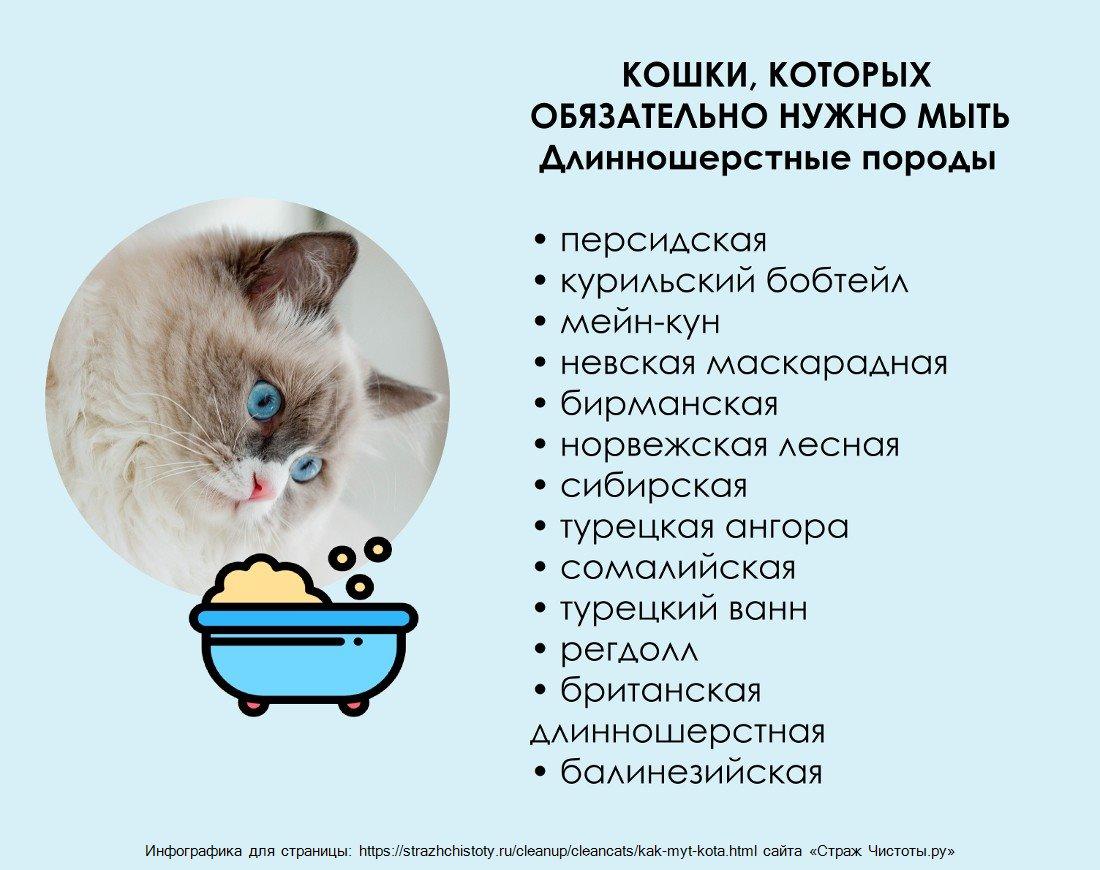 Как мыть длинношерстную кошку