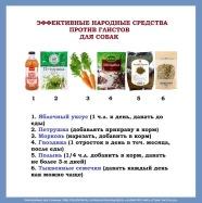 Narodnye-sredstva-ot-glistov-dlya-sobak-1.jpg