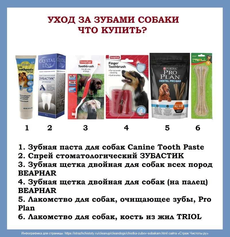 Лечение зубов собаки