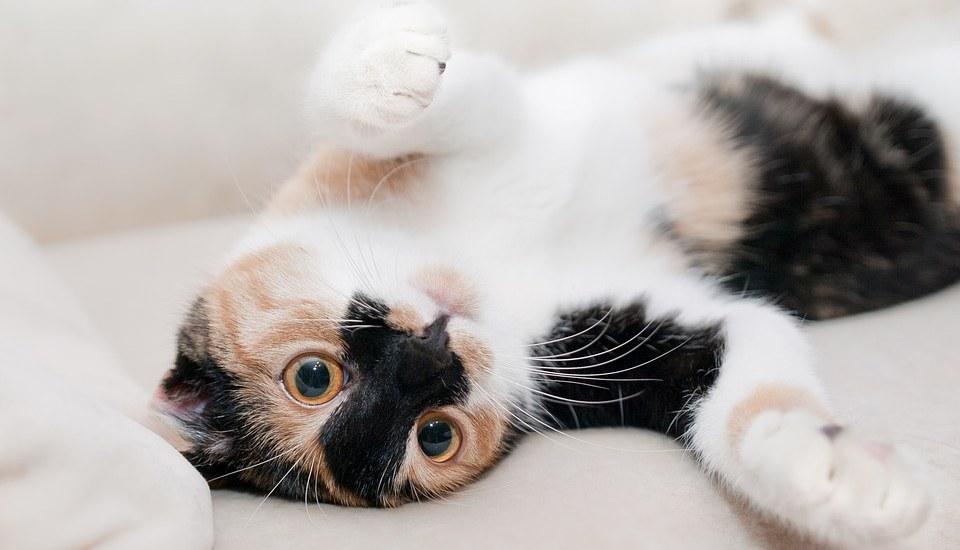 как дать лекарство коту
