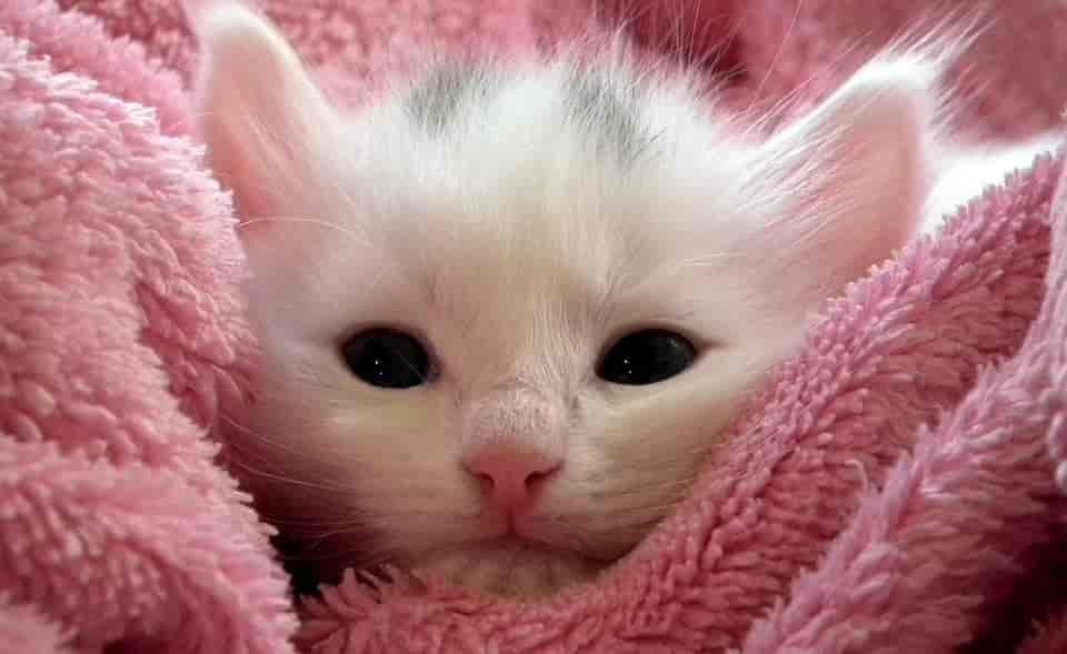 котенок милый
