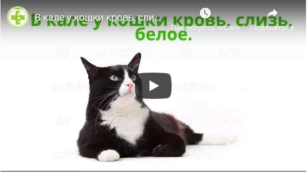 У котенка понос с кровью и слизью и рвота