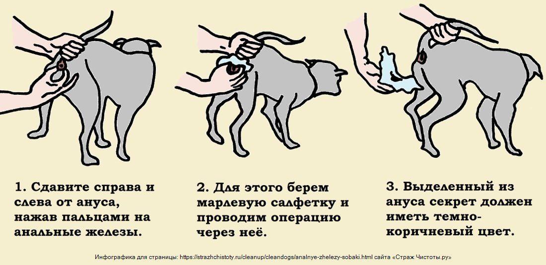 Воспаление желез у собак под хвостом